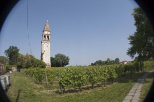 Small vineyard on the island of Borano: for wine that is made exclusively on the island